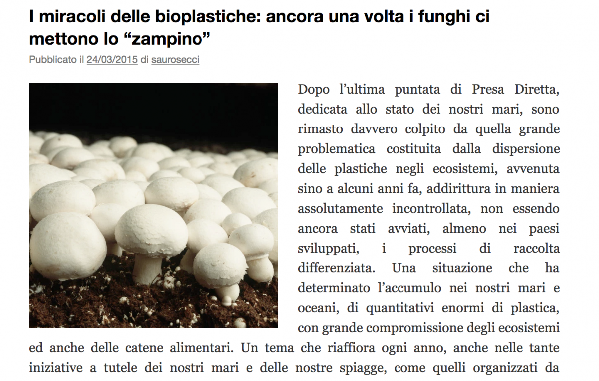 L'Ippocampo – press article