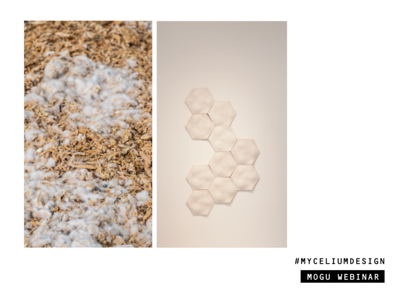 // MOGU AGENDA – MYCELIUM: BIOMASSES & SUSTAINABLE MATERIALS // WEBINAR @LAZIOFABLAB.IT