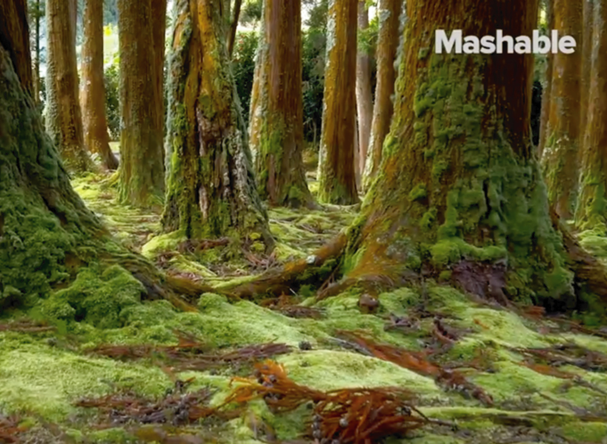 MASHABLE VIDEO ARTICLE // HOW MUSHROOMS ARE TRANSFORMING THE CONSTRUCTION INDUSTRY
